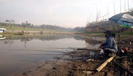 Alkisah Ikan Kepala Tanpa Badan Malang, Fakta?